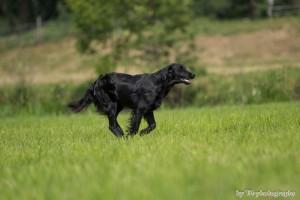 Hundeseminar 13.07.2013 235