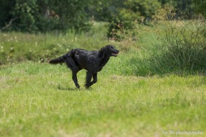 Hundeseminar 13.07.2013 465