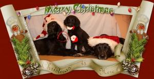 weihnachten_Hunde_2014