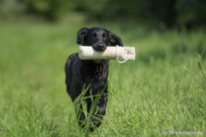 Hundeseminar 13.07.2013 559